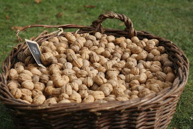 ošatka plná ořechů