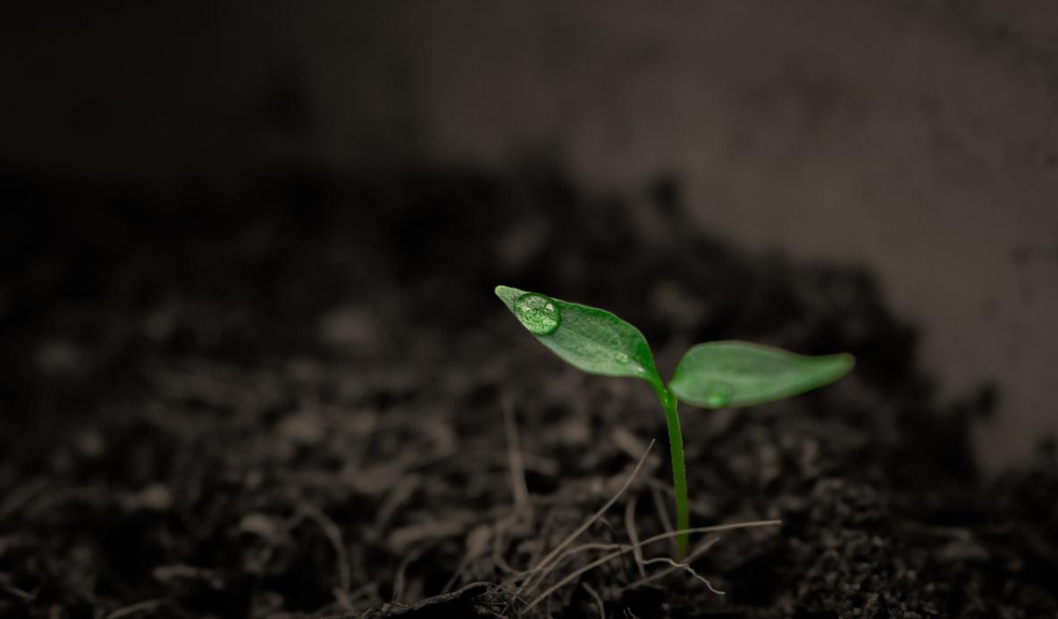 růst klíčku